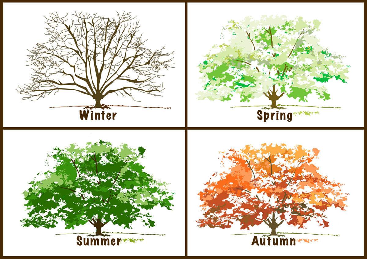 The-Seasons