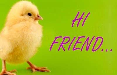 hi-friend-chicken-graphic